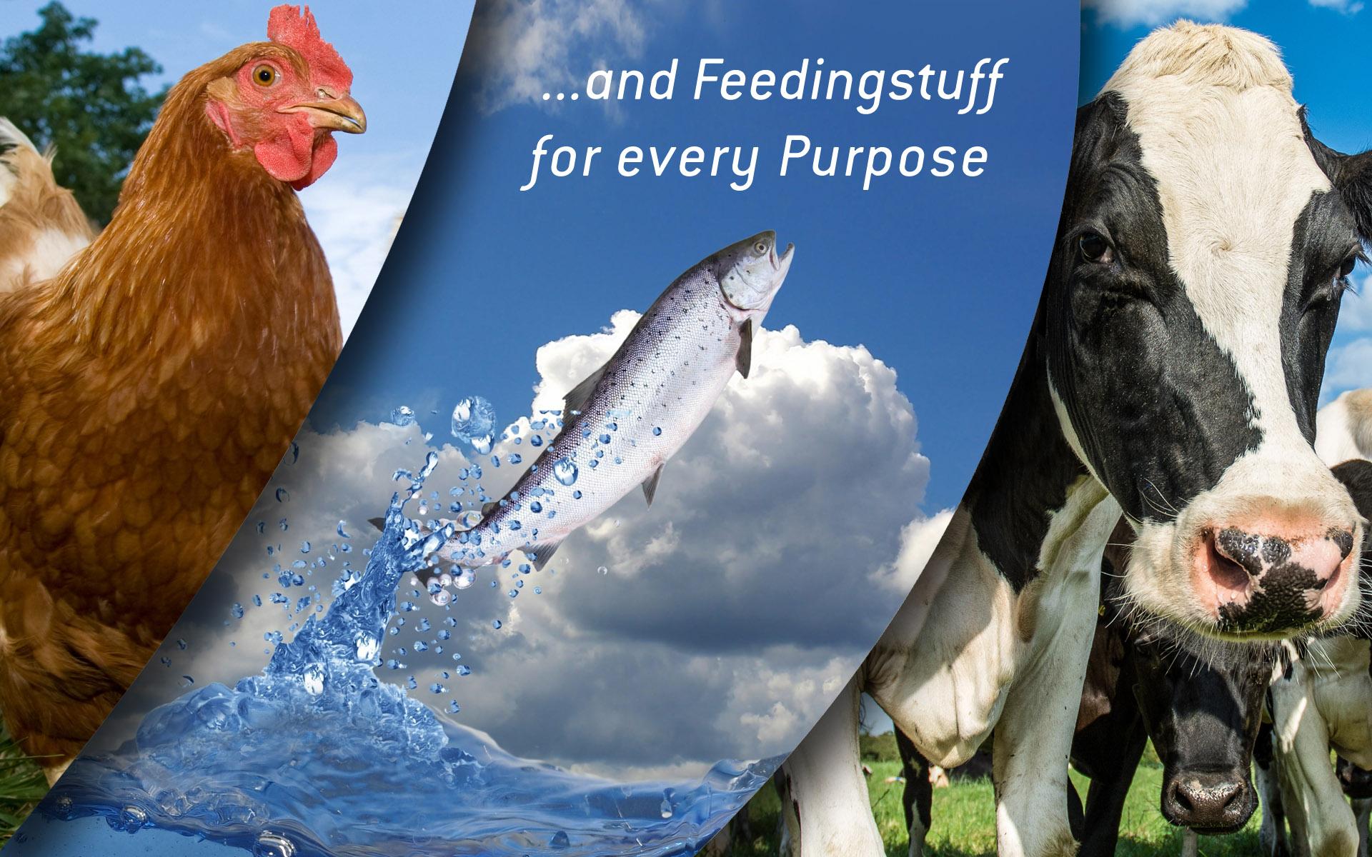 Feeding Stuff